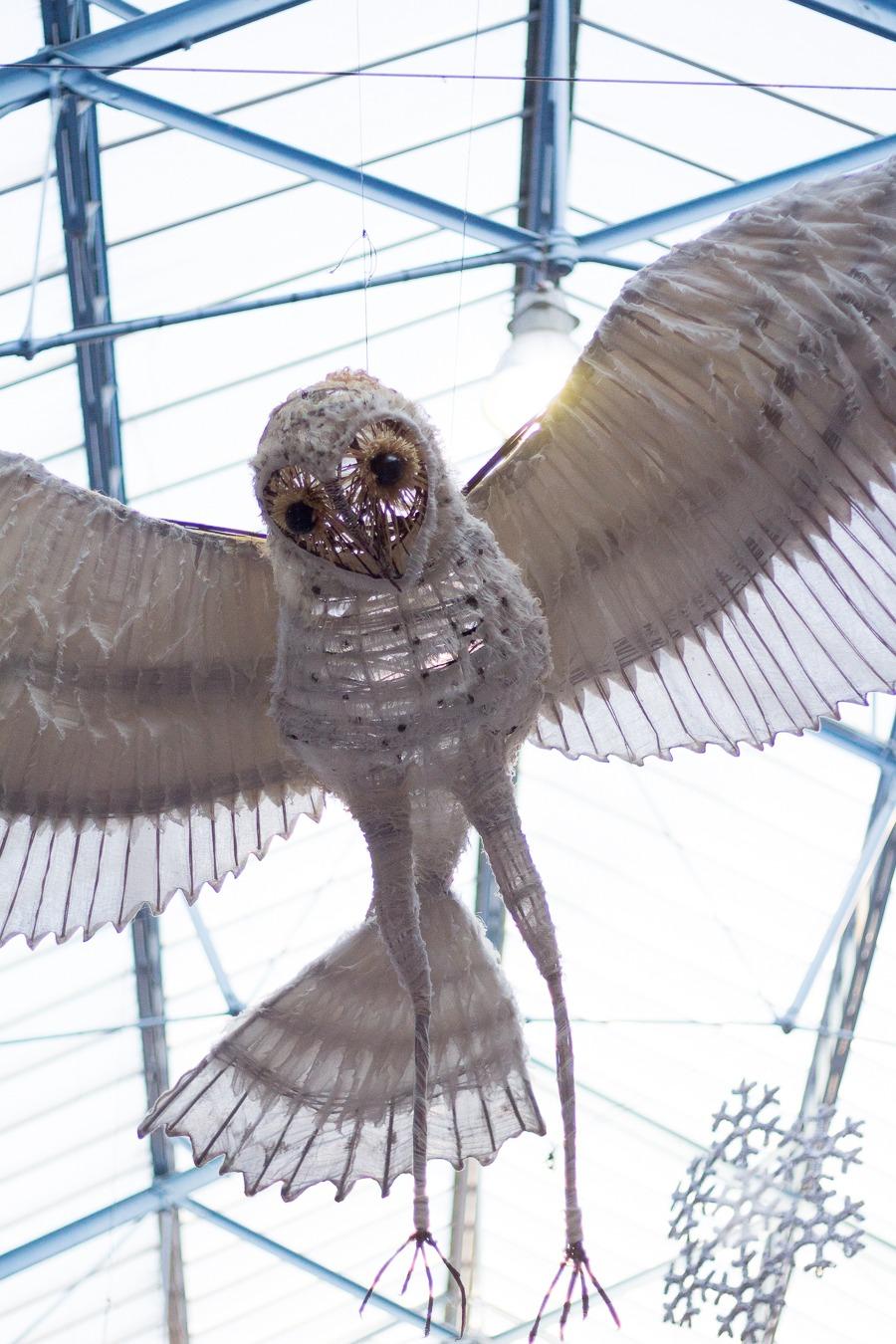 Abergavenny market owl installation