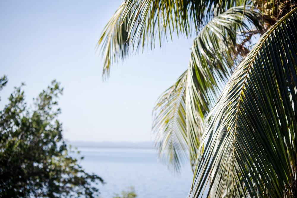 Palm trees in Varadero, Cuba