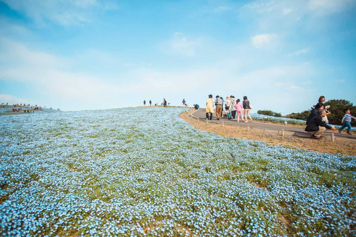 Hitachi Seaside Park day trip from Tokyo