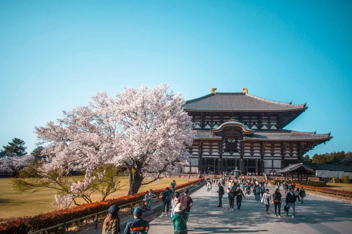 Day trips from Tokyo to Nara with the JR Japan Rail pass