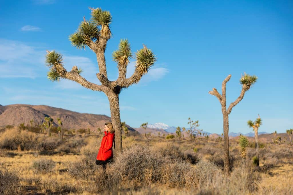 Standing against a Joshua tree at Joshua Tree National Park in California USA