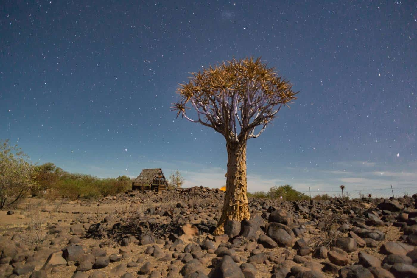 Quiver Tree Namibia