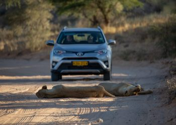 7 Reasons Why You Should Self Drive South Africa