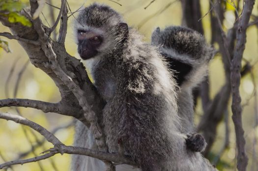 30 Kruger National Park Facts + Tips To Know Before You Go