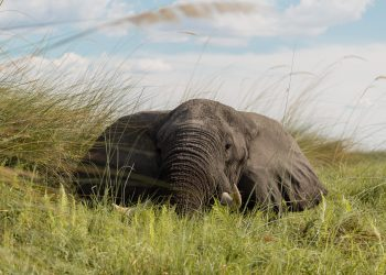 How to visit the Okavango Delta on a budget