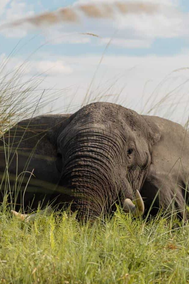 Okavango Delta on a budget safari elephant
