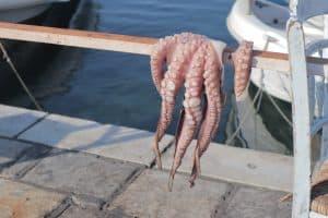 Fresh seafood drying in Naxos, Greece