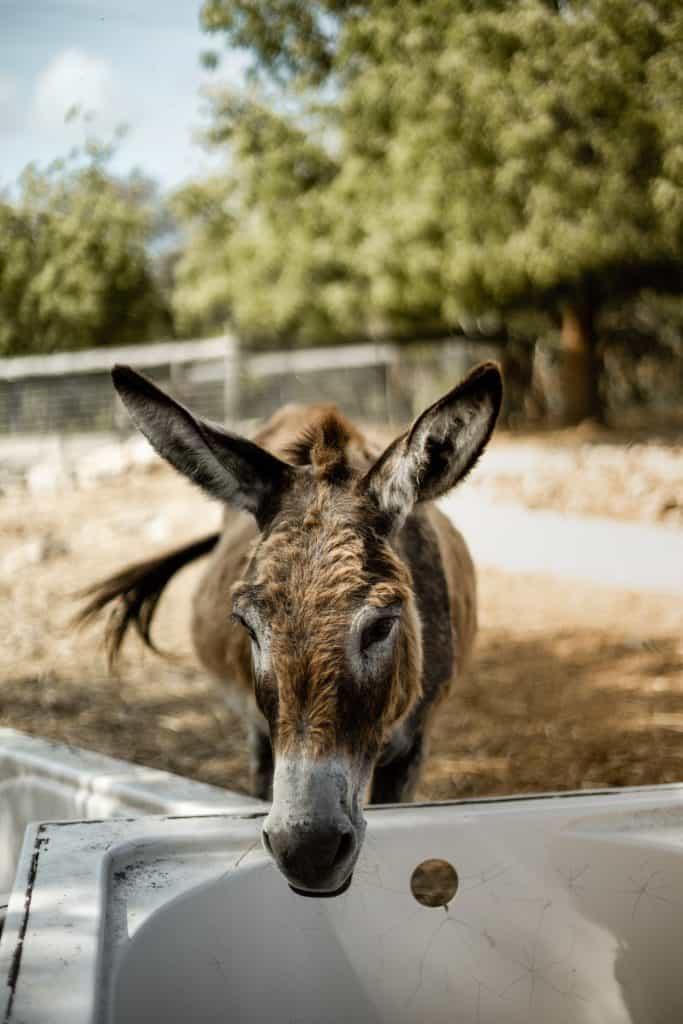 Antigua donkey sanctuary
