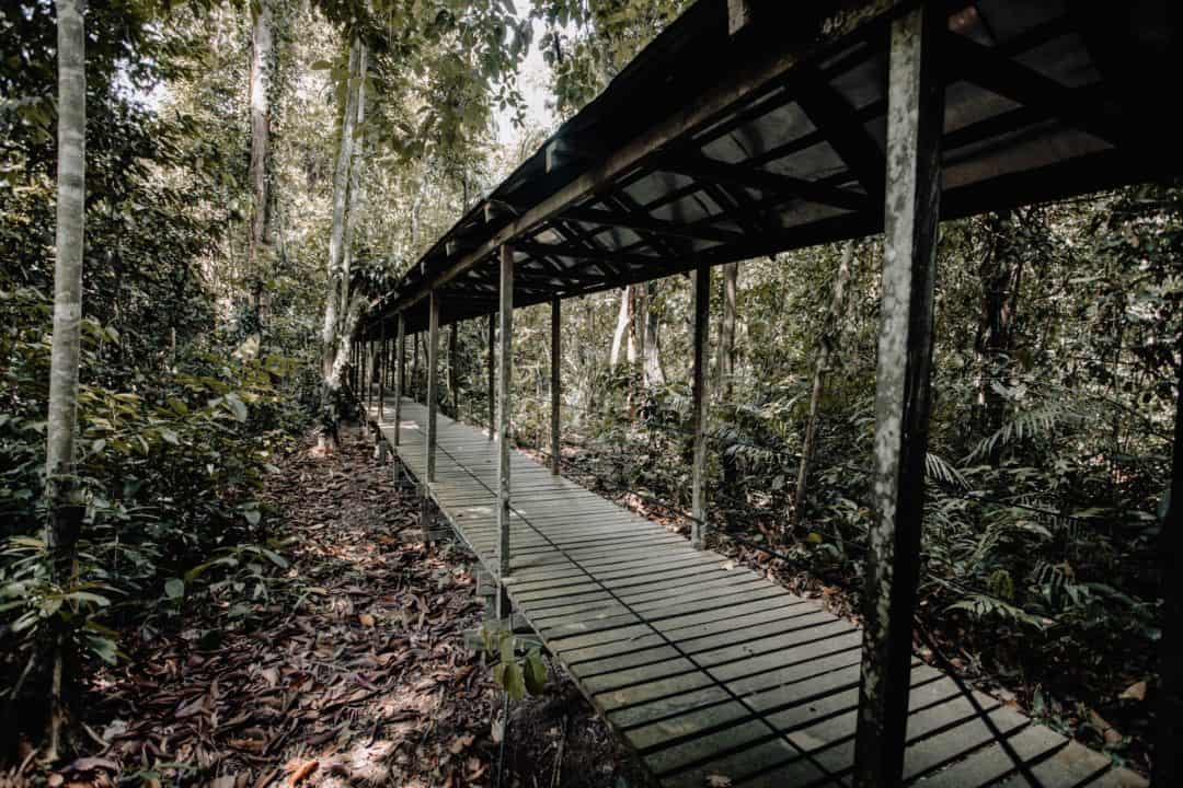 Forest boardwalk at Sukau Rainforest Lodge