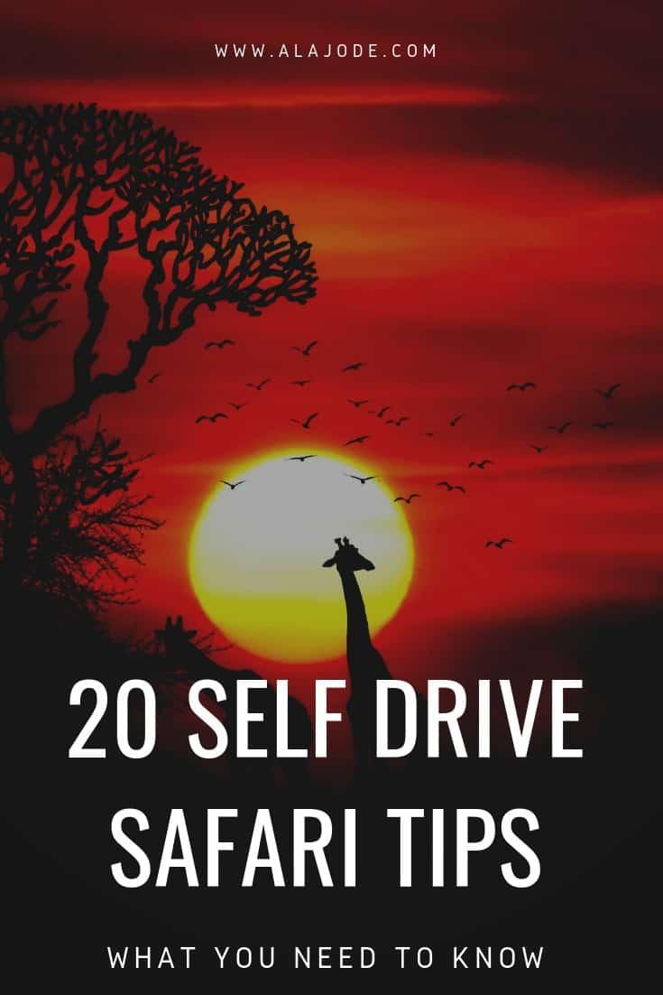 self drive safari tips