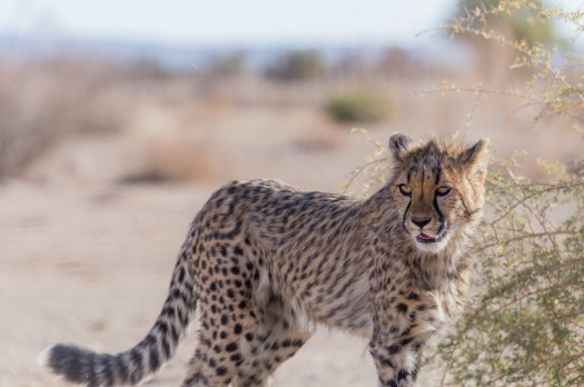 8 Types Of Safari Every Wildlife Lover Should Try