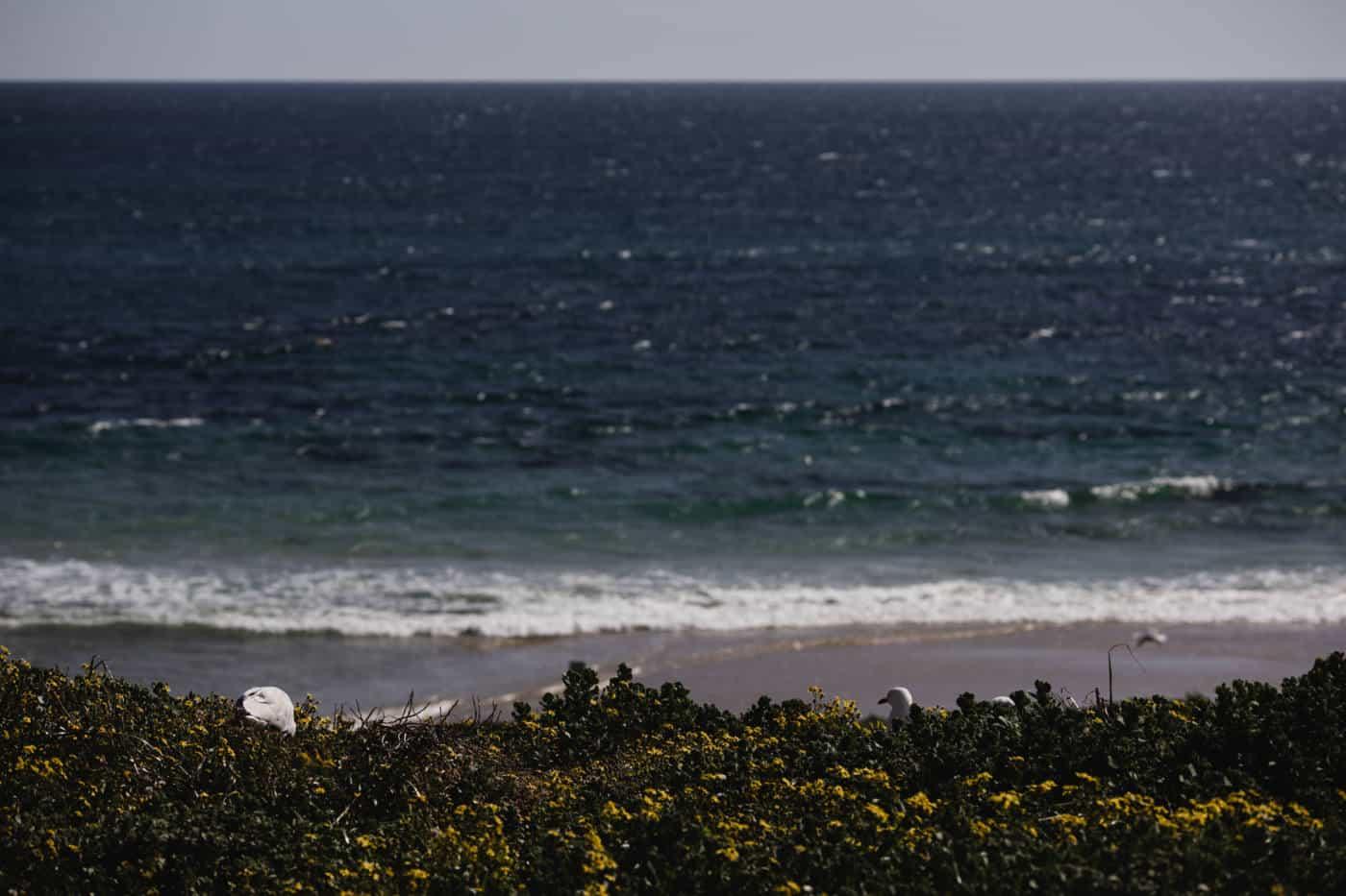 Sea views on Penguin Island Perth