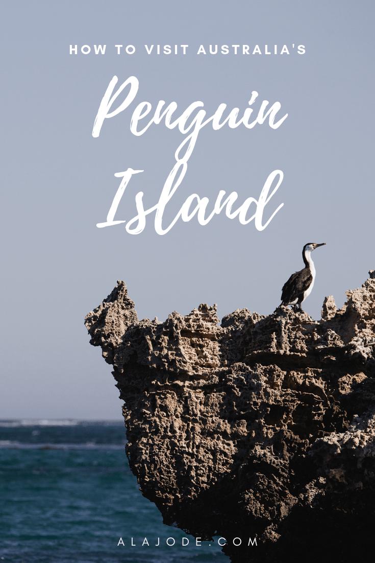 how to visit Penguin Island in Australia