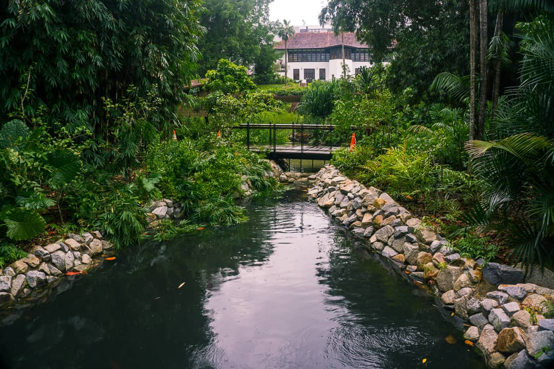 A small stream and trees in the Botanic Gardens in Singapore