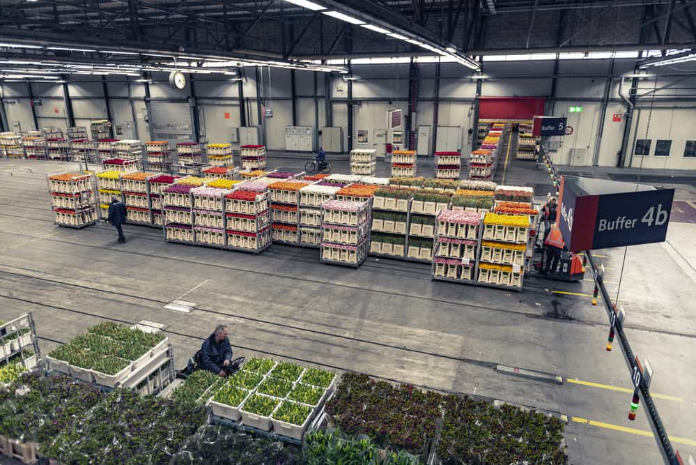 Aalsmeer Flower Auction near Amsterdam