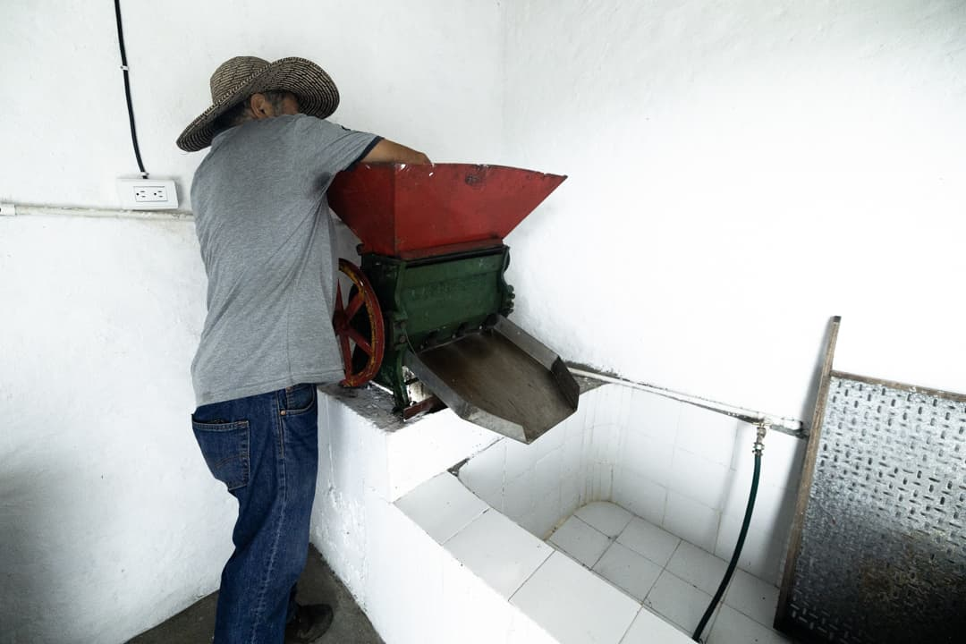 The coffee making process in Colombia