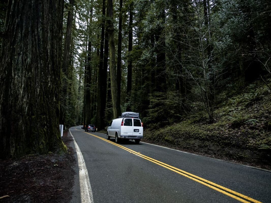 Red Wood National Forest California USA