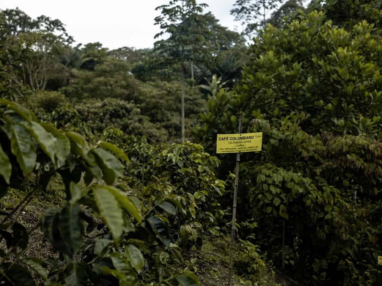 A sign about Colombian coffee farming at Selina Quindio in Filandia Colombia