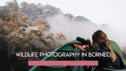 Wildlife photography travel vlog