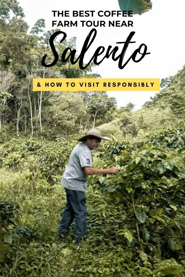 Coffee farm near Salento