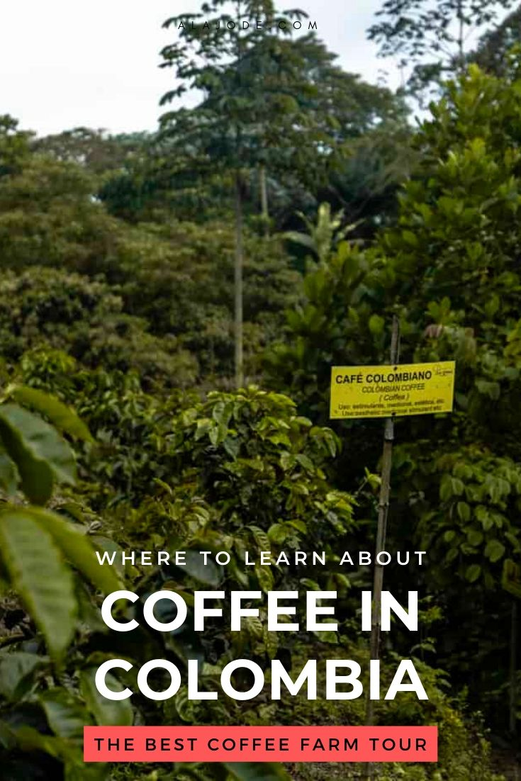 Coffee in Colombia (1)