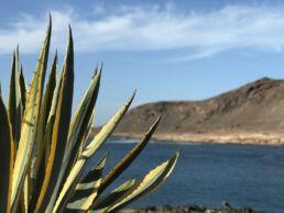 Cactus in front of Confital at La Isleta in Las Palmas Gran Canaria